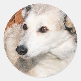 Lírio - híbrido ronco Photo-10 de Terrier Adesivo