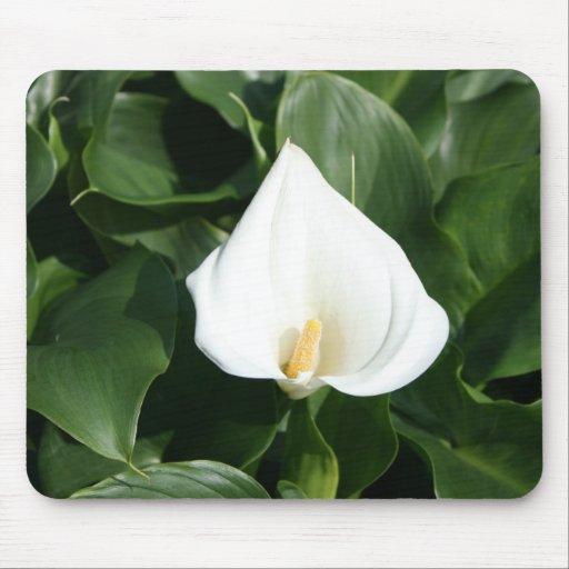 Lírio que cresce na plantação do lírio de Calla, F Mouse Pad