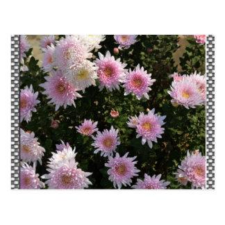 Lírios cor-de-rosa cartão postal