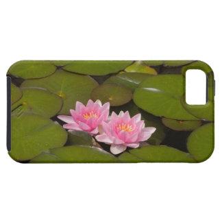 Lírios de água de florescência capa para iPhone 5