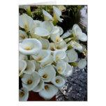 Lírios de Calla que crescem na plantação do lírio, Cartão