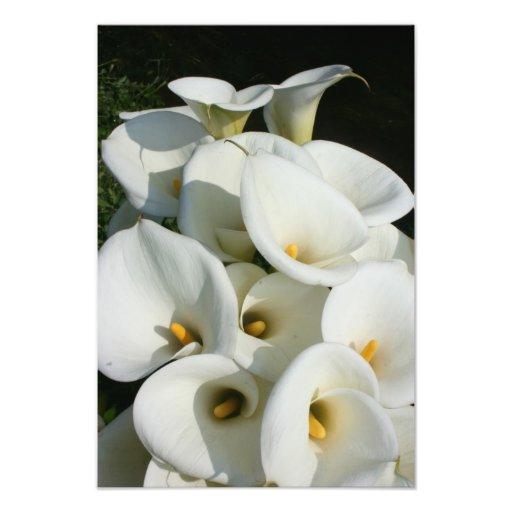 Lírios na plantação do lírio de Calla, Formosa Impressão De Foto