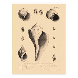 Litografia do vintage do cartão das ilustrações de