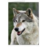 Lobo Cartão