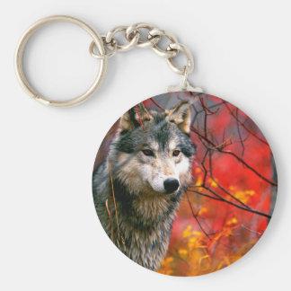 Lobo cinzento na folha vermelha e amarela bonita chaveiro