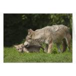 Lobo com filhote de cachorro cartoes