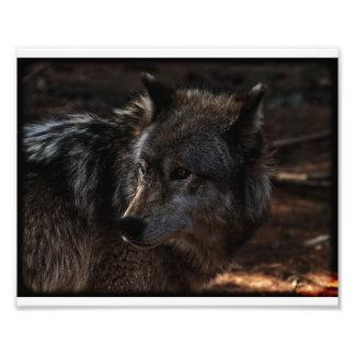 Lobo de madeira impressão de foto