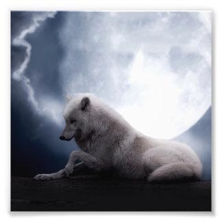 Lobo impressionante e lobo branco da lua impressão de foto