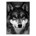 Lobo preto & branco cartoes