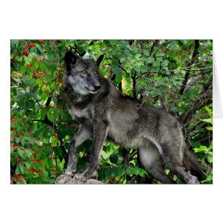 Lobo preto com o cartão vermelho das bagas