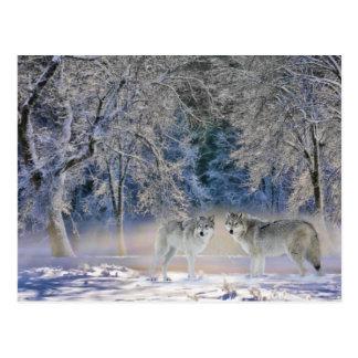 Lobos do cartão de Yellowstone