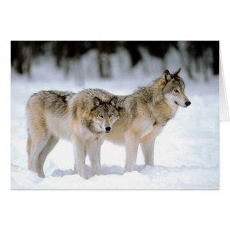 Lobos no cartão da região selvagem