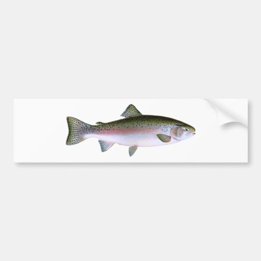 Logotipo da pesca da truta de arco-íris da truta p adesivo