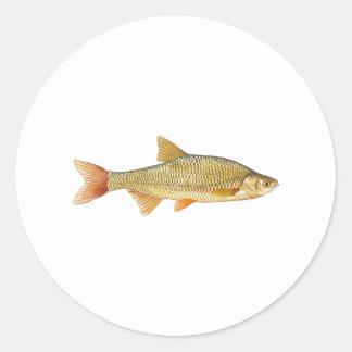 Logotipo do peixe do género Notropis dourado Adesivo