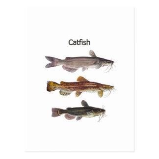 Logotipo norte-americano do peixe-gato cartão postal