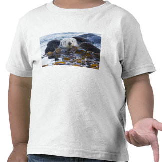 Lontra de mar envolvida na alga camisetas