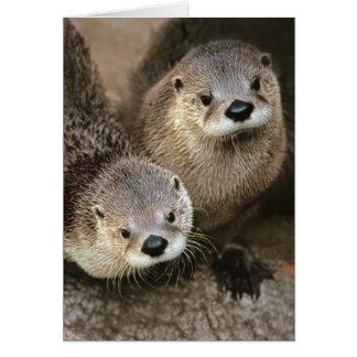 Lontras de rio norte-americanas cartão comemorativo