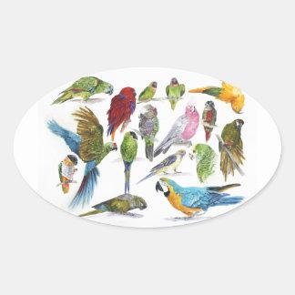 Lotes de papagaios diferentes dos presentes adesivo oval