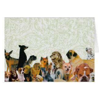 Lotes do cartão da colagem dos cães