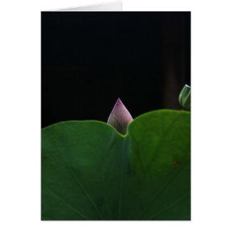 Lotus recém-nascido cartoes