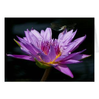 Lotus roxo Waterlily & cartão da libélula