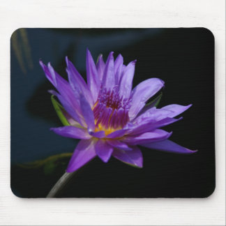 Lotus roxo Waterlily Mousepad