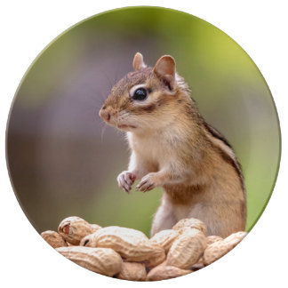 Louça Chipmunk com amendoins