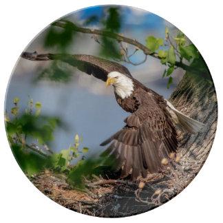 Louça De Jantar Águia americana que sae do ninho