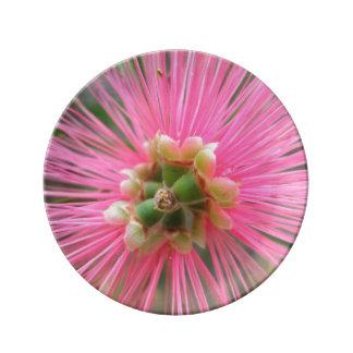 Louça De Jantar Flor cor-de-rosa da árvore de goma