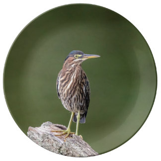 Louça De Jantar Garça-real verde em um registro
