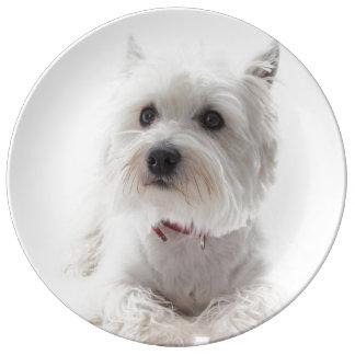 Louça De Jantar Montanhas ocidentais brancas adoráveis Terrier