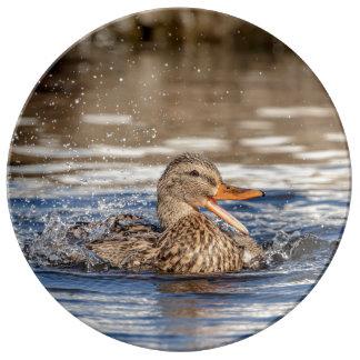 Louça De Jantar Pato do pato selvagem no parque tragando