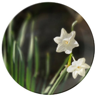 Louça De Jantar Placa fina da porcelana de Paperwhites do narciso