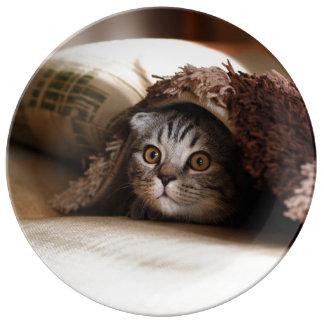 Louça Gatinho bonito que olha do sofá