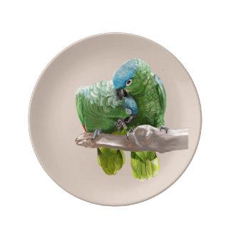 Louça Pares do papagaio