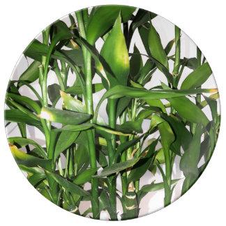 Louça Planta da casa do folha do verde e os de bambu dos