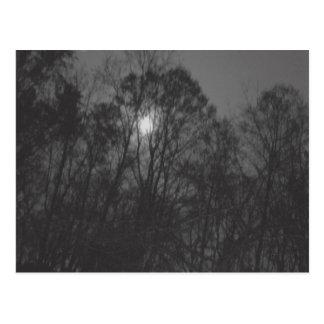 Lua & cartão das árvores cartão postal