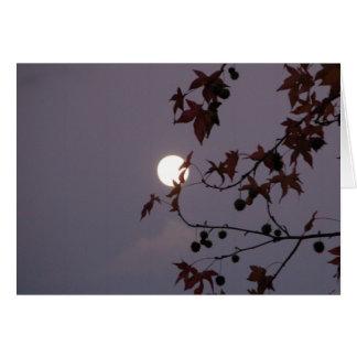 Lua cheia atrás do cartão frondoso do ramo