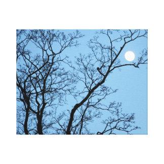 Lua cheia na árvore