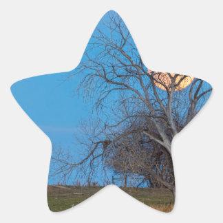 Lua mega do castor adesivo estrela