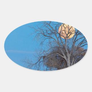 Lua mega do castor adesivo oval