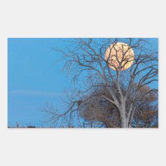Lua mega do castor adesivo retangular