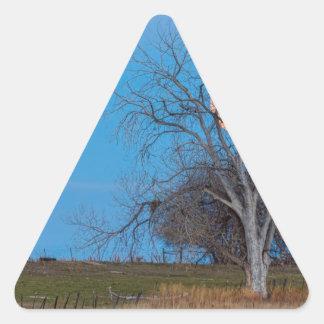 Lua mega do castor adesivo triangular