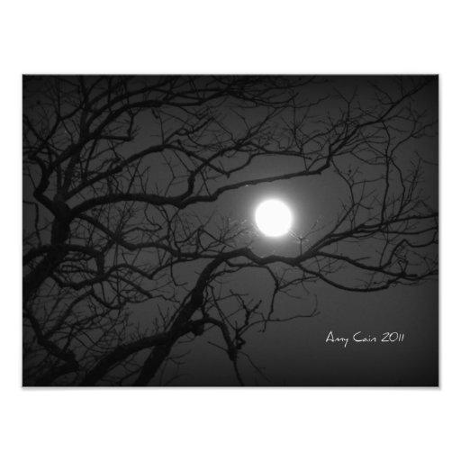 Luar através das árvores foto arte