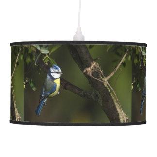 Luminária De Teto Melharuco azul euro-asiático, caeruleus dos