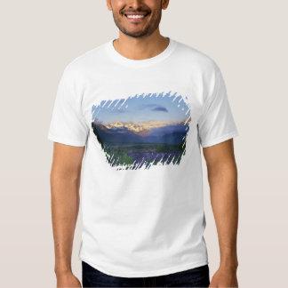 Lupine e a partilha principal, a passagem de camisetas