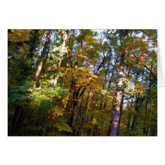 Luz do sol do outono do cartão de nota da floresta