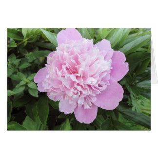 Luz - jardim cor-de-rosa da peônia cartão comemorativo