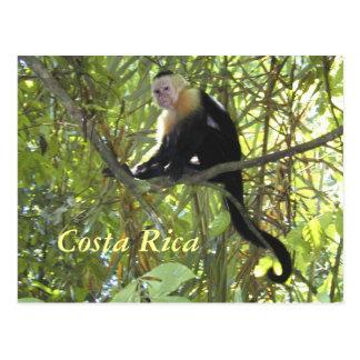 Macaco Costa Rica do Capuchin do cartão