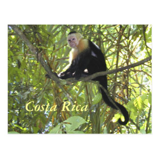 Macaco Costa Rica do Capuchin do cartão Cartão Postal